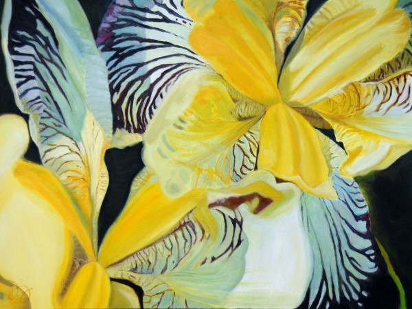 "30""X40""  Yellow/Purple Iris"