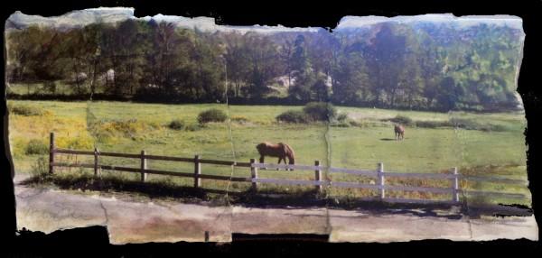 72 2 horses rt 9