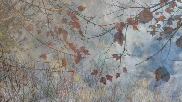 Two Years Apart, Nov 6 Leaves: lltd edition digital collage archival inkjet print on museum grade, 100% cotton rag paper