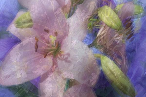 Pink Lily Purple Iris