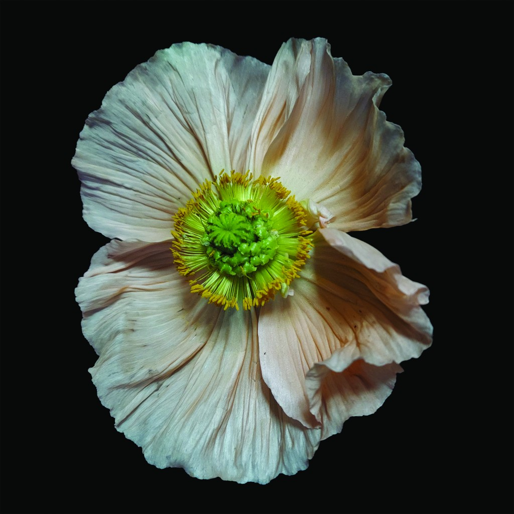 Icelandic Poppy #3, ltd edition archival inkjet print on museum grade, 100% cotton rag paper